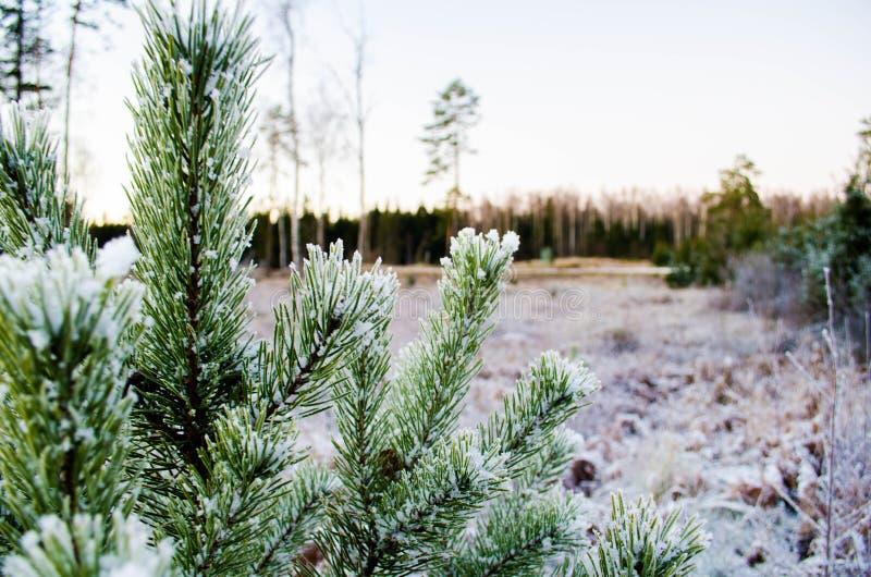 Beleza das cores do inverno Otanki, Letónia imagem de stock royalty free