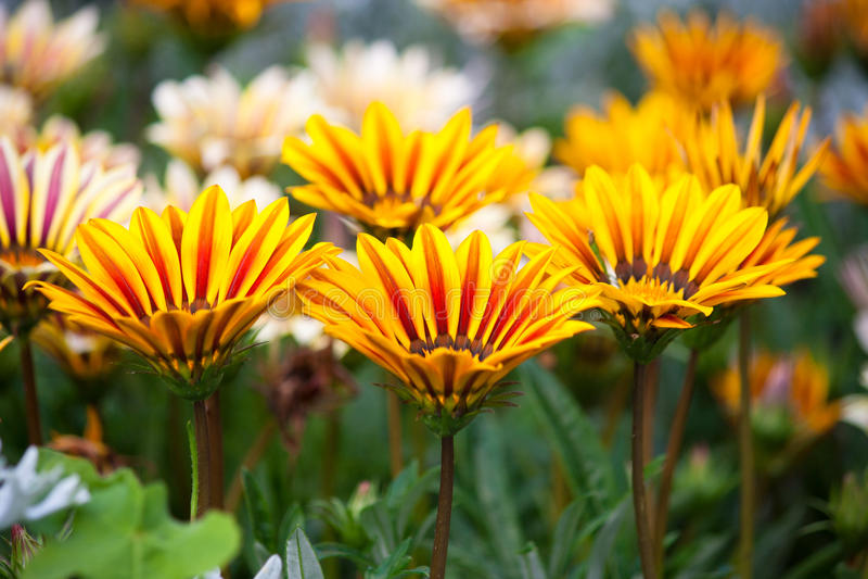 Beleza das flores fotografia de stock