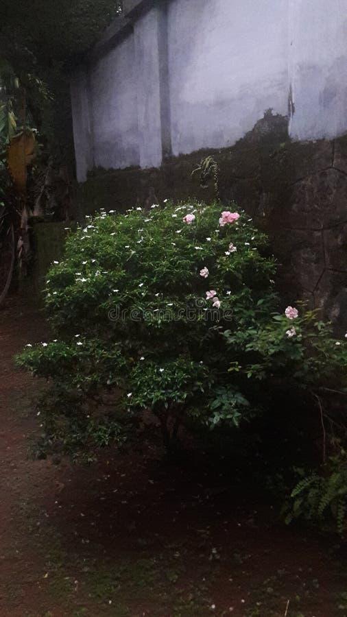 Beleza das flores fotos de stock royalty free