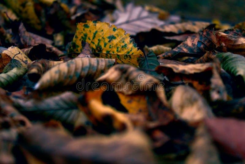 Beleza das folhas do autmun imagens de stock