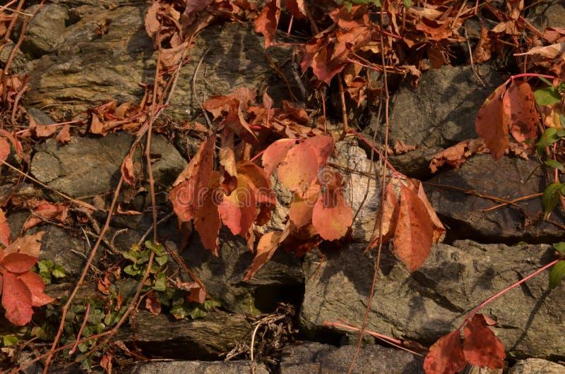 Download A Beleza Das Folhas No Outono Imagem de Stock - Imagem de queda, vermelho: 80101197