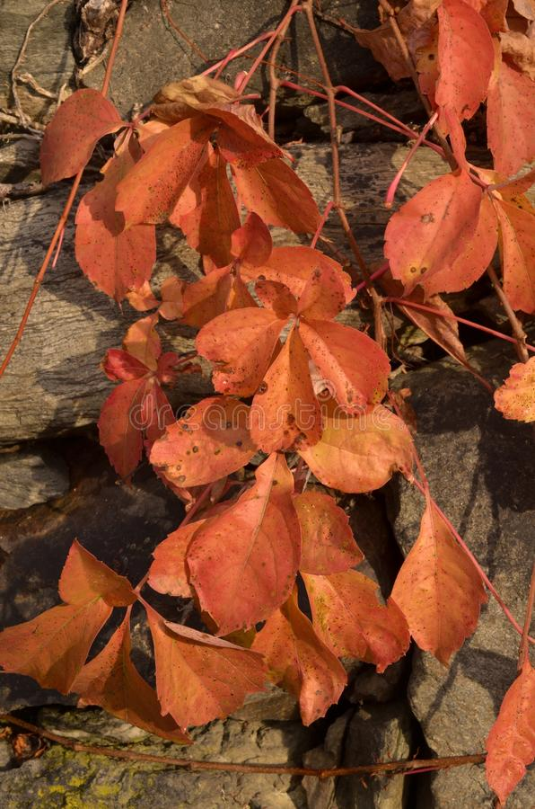 Download A Beleza Das Folhas No Outono Imagem de Stock - Imagem de ambiente, quadro: 80101489