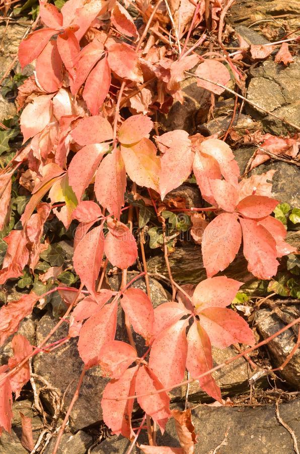 Download A Beleza Das Folhas No Outono Foto de Stock - Imagem de quadro, outono: 80101816