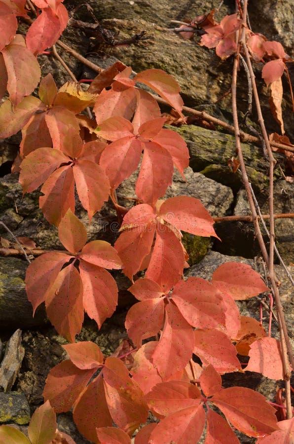 Download A Beleza Das Folhas No Outono E Na Pedra Imagem de Stock - Imagem de outdoors, folha: 80102713