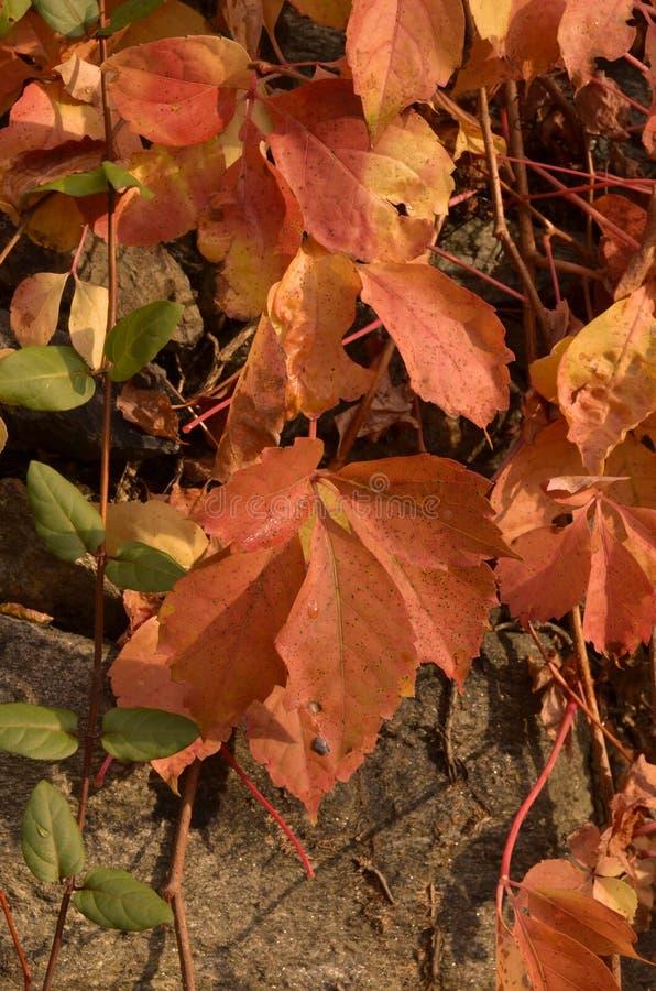 Download A Beleza Das Folhas No Outono E Na Pedra Imagem de Stock - Imagem de alaranjado, se: 80102841