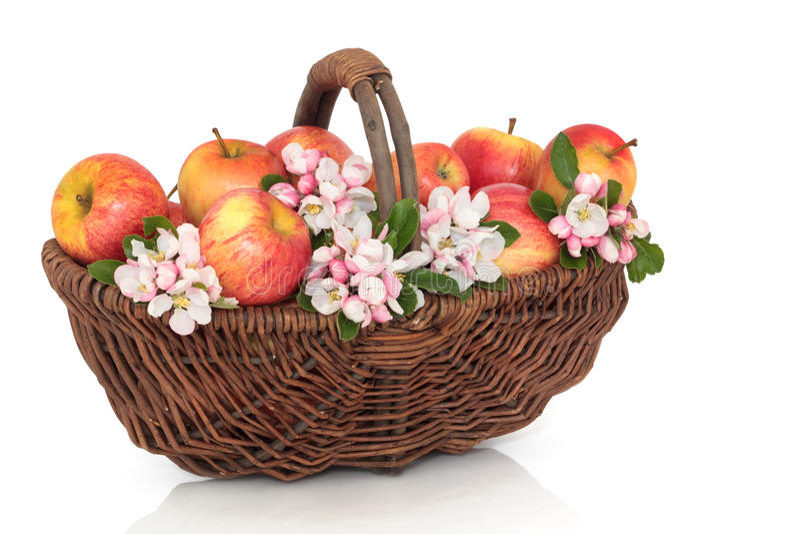 Beleza de Apple e de flor fotografia de stock