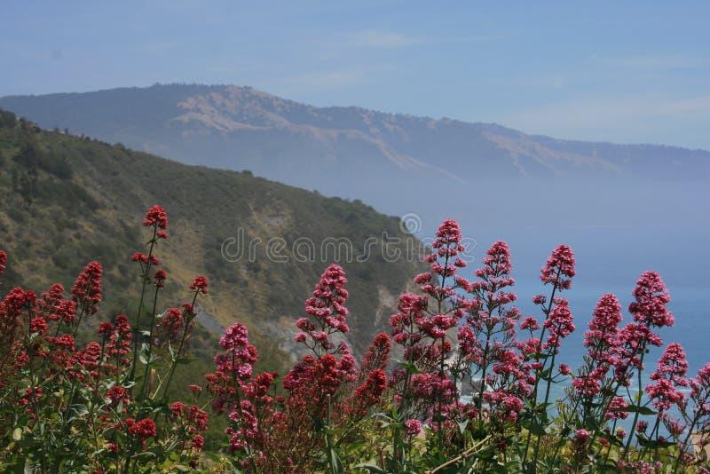 Beleza de Big Sur foto de stock royalty free