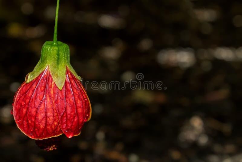 A beleza de jardins de Kew imagens de stock