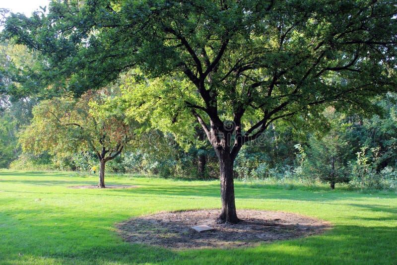 A beleza de Julia Davis Park foto de stock