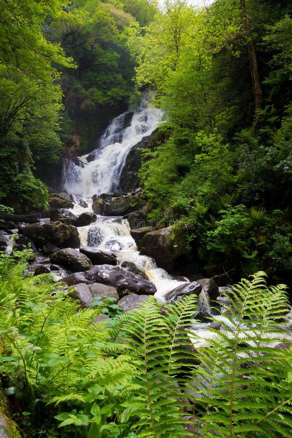 Beleza de Killarneys imagens de stock