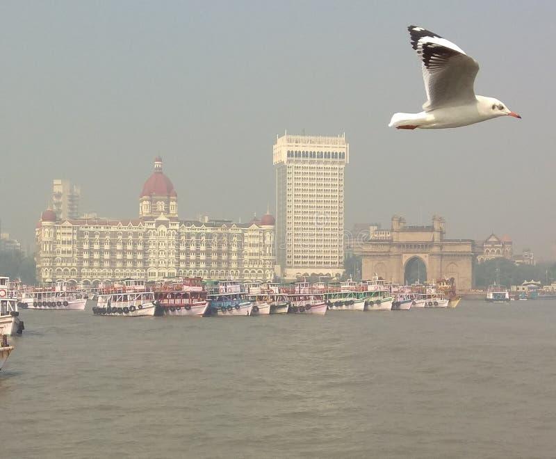 Beleza de mumbai fotografia de stock