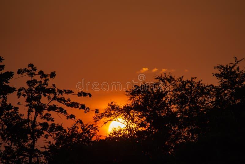 A beleza de um por do sol atrás de uma árvore e de um céu alaranjado foto de stock royalty free