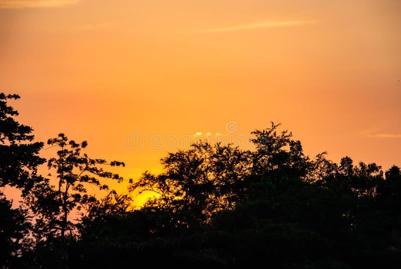 A beleza de um por do sol atrás de uma árvore e de um céu alaranjado imagem de stock royalty free
