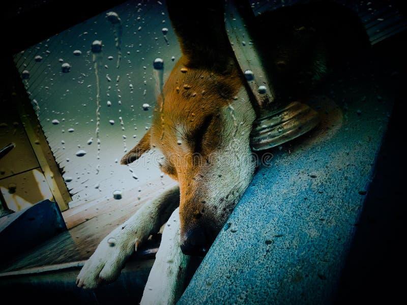 Beleza do cão imagens de stock