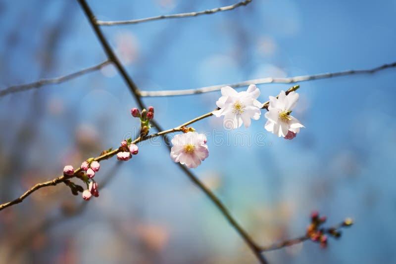 Beleza do espírito da primavera da natureza imagem de stock
