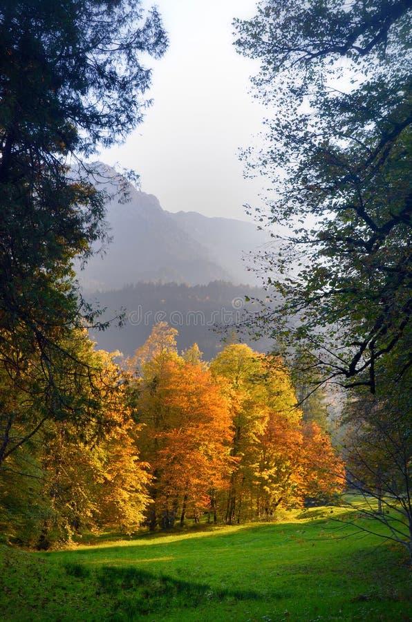 Beleza do outono foto de stock