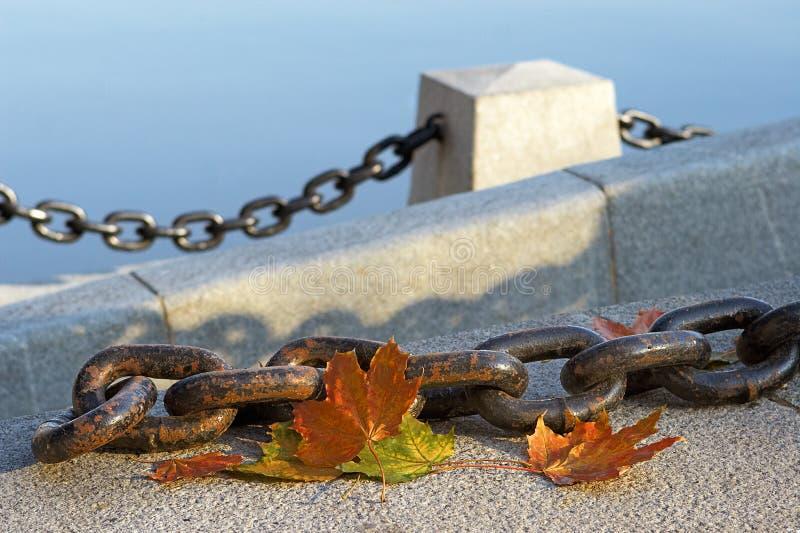 Beleza Do Outono De Desvanecimento Fotografia de Stock