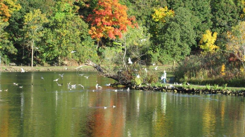 Beleza do outono em ilhas de Dufferin imagem de stock