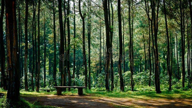 A beleza do parque de Sikembang, Batang, Java central, Indonésia imagens de stock