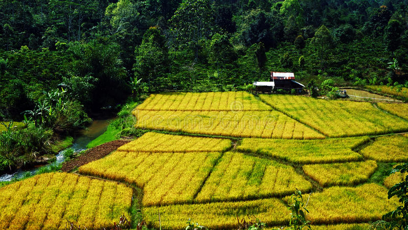 A beleza dos campos, Lampung ocidental fotografia de stock