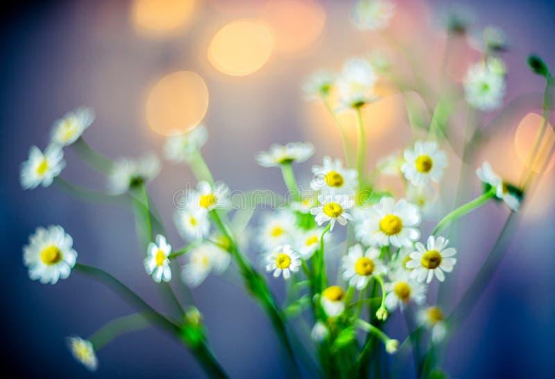 Beleza macia das flores imagens de stock