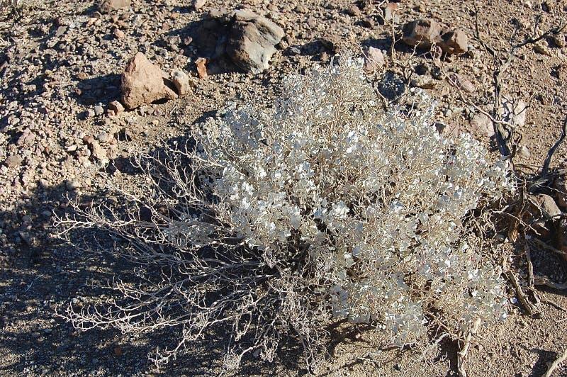 Beleza murcho delicada secada da terra imagem de stock