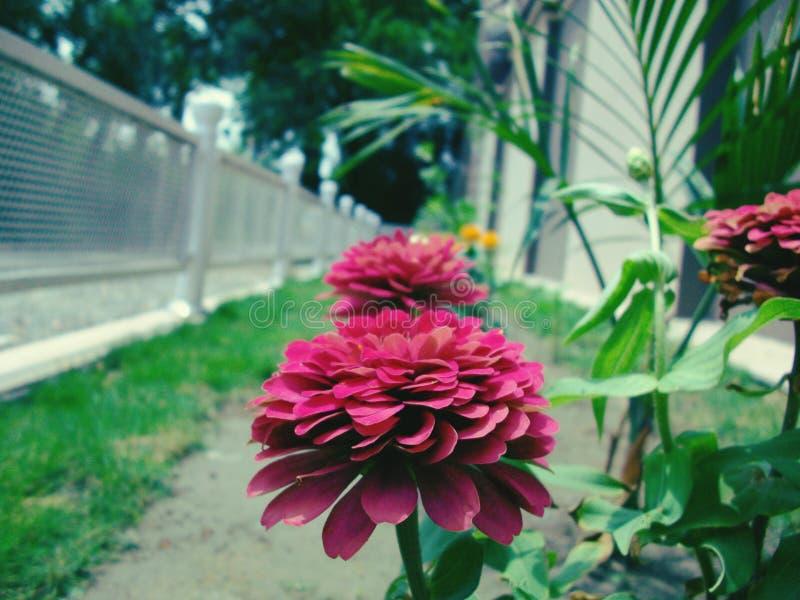 Beleza natural da flor fotos de stock royalty free