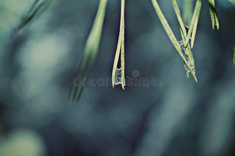 Beleza nos detalhes foto de stock