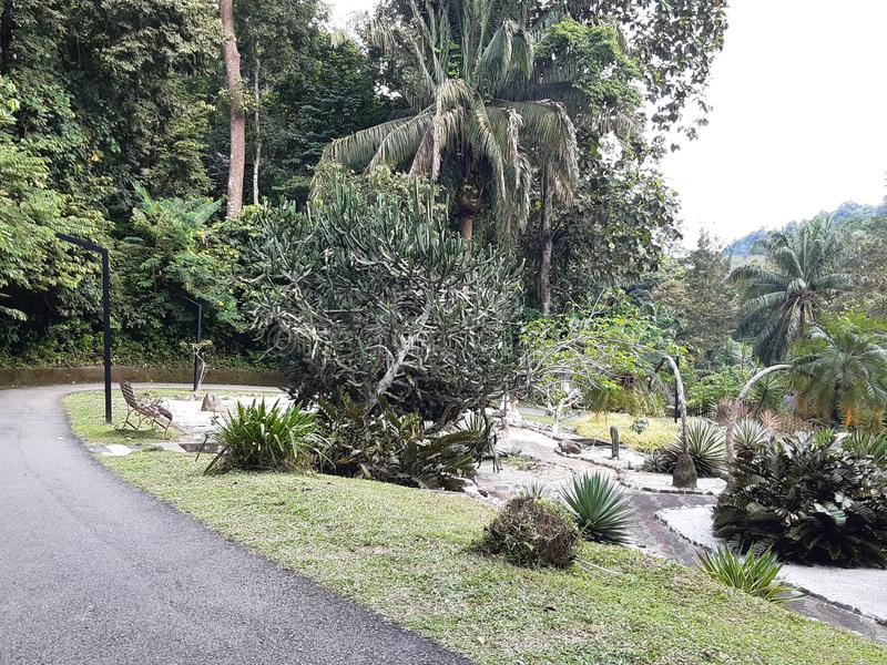 Beleza Tropical Lush Greenery no Jardim Botânico Penang imagens de stock royalty free