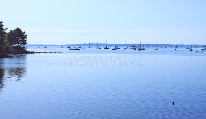 Download Belfast, Maine harbor stock photo. Image of pine, reflections - 10906704