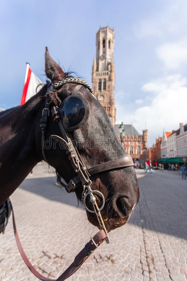 Belfort tower in Bruges at the Market Square with horses, Belgium. Belfort tower or Belfort van Brugge in Bruges at the Market Square or Markt with horses stock photo