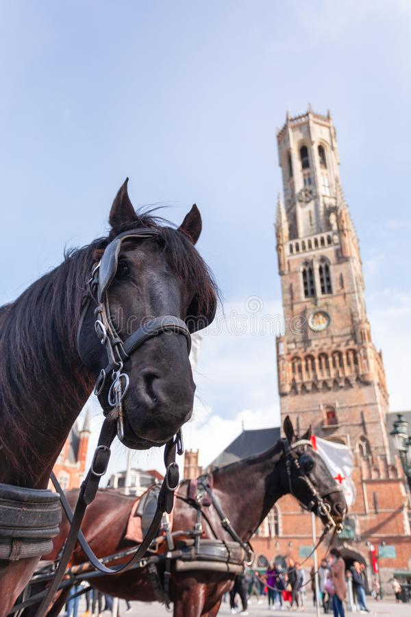 Belfort tower in Bruges at the Market Square with horses, Belgium. Belfort tower or Belfort van Brugge in Bruges at the Market Square or Markt with horses stock photos