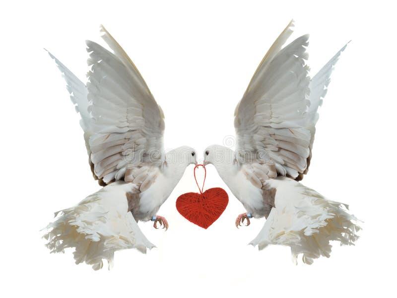 belfrów gołąbek kierowa mienia czerwień ich biel dwa fotografia royalty free