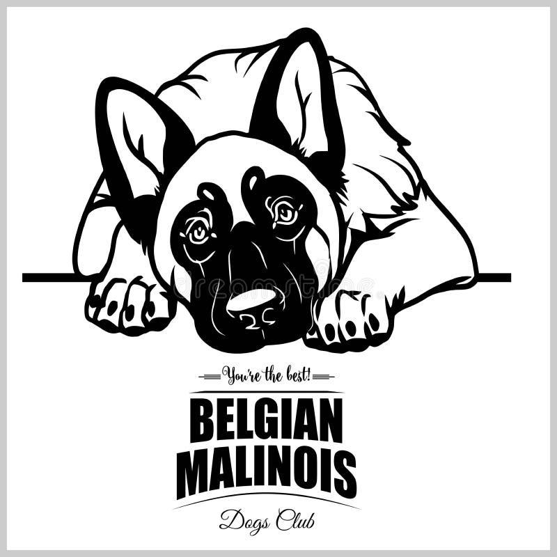 Belgare Malinois - vektorillustration för t-skjorta, logo- och mallemblem royaltyfri illustrationer