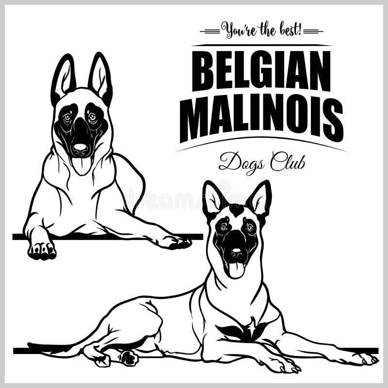 Belgare Malinois - vektorn ställde in den isolerade illustrationen på vit bakgrund royaltyfri illustrationer
