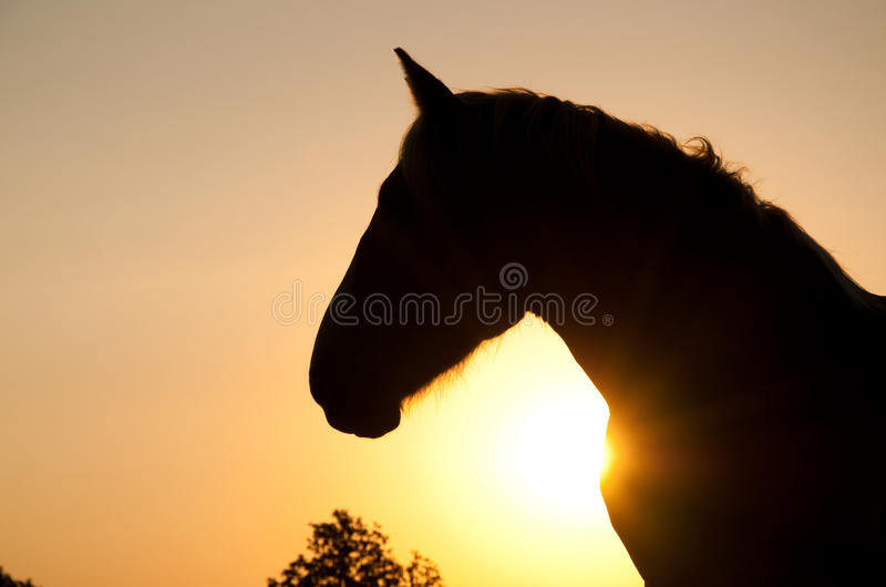 Belgian Draft horse silhouetted against rising sun. Magnificent profile of a powerful Belgian Draft horse silhouetted against rising sun in rich sepia tone royalty free stock image