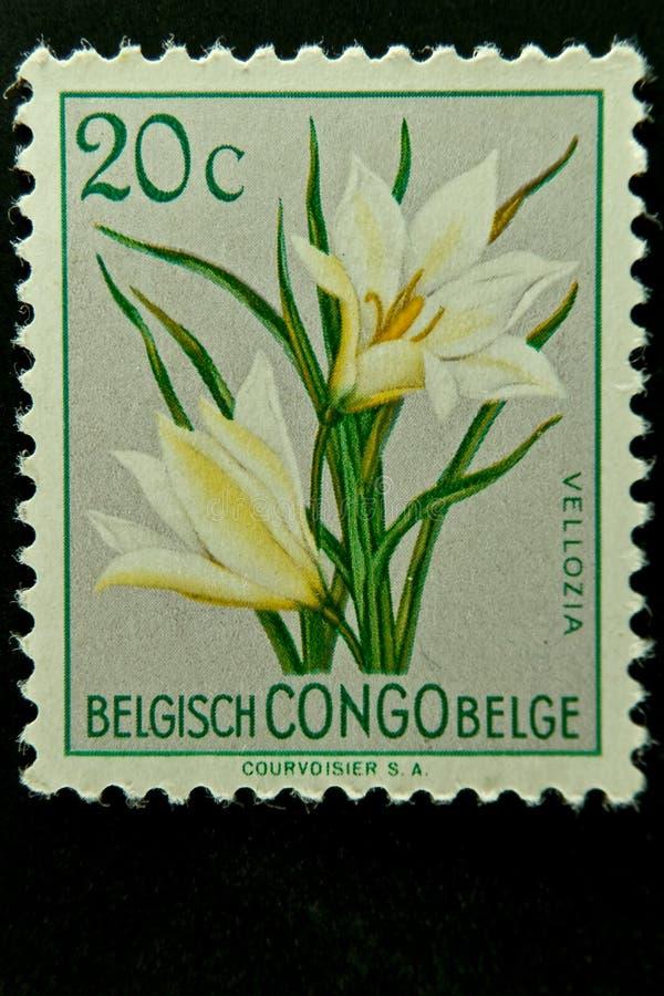 Belgien congo poststämpel arkivfoton