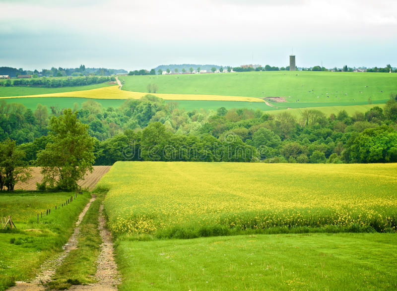 Belgium Rustic Landscape. With Countryside Road on Green Grass and Yellow Flowers Field and Spotted Cows in Cloudy Day Outdoors royalty free stock image
