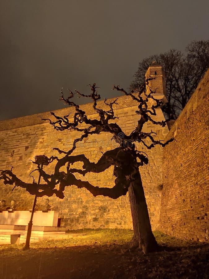 Belgrad Serbien Kalemegdan Fästkringsdelar och gamla träd arkivfoton