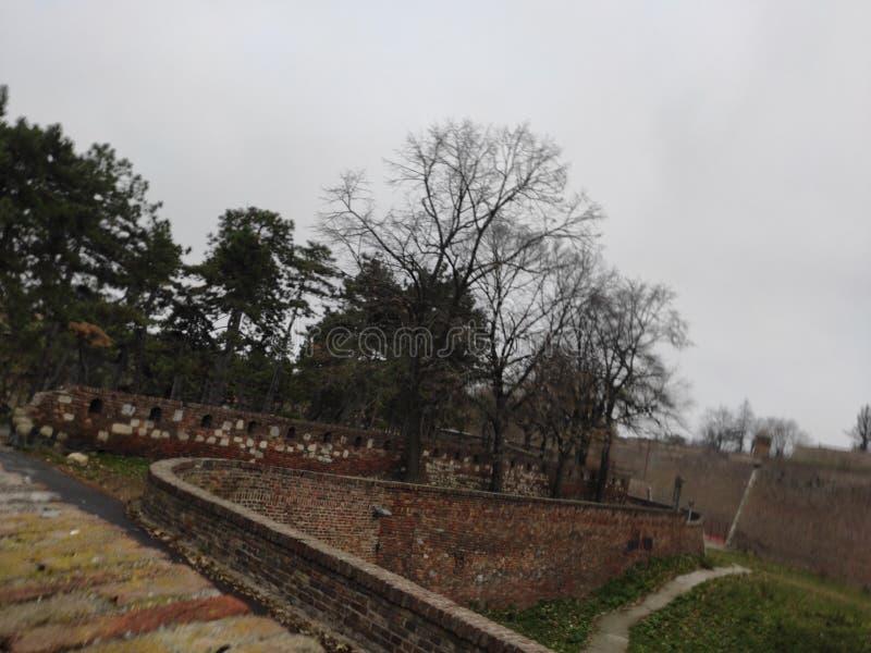 Belgrad Serbien Kalemegdans vinterskog i parken royaltyfria bilder