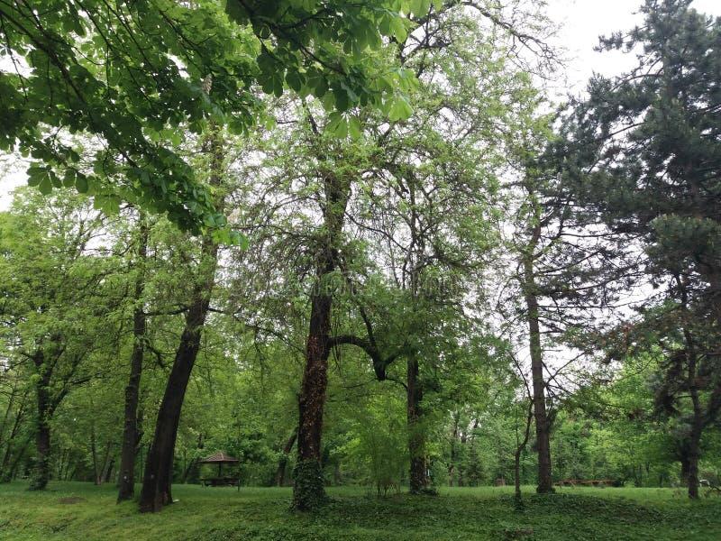 Belgrade - parc Sumice photographie stock