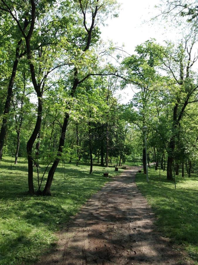 Belgrade - parc Sumice images libres de droits