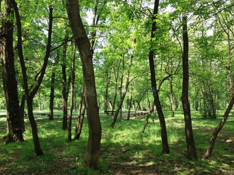 Belgrade - parc Sumice photos stock