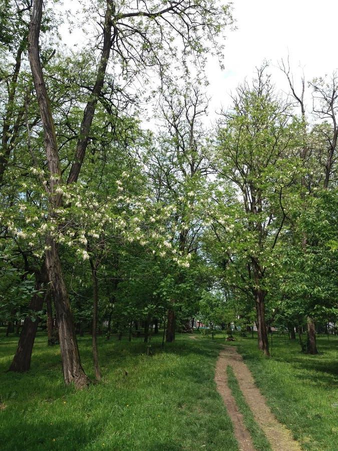 Belgrade - parc Sumice photo stock