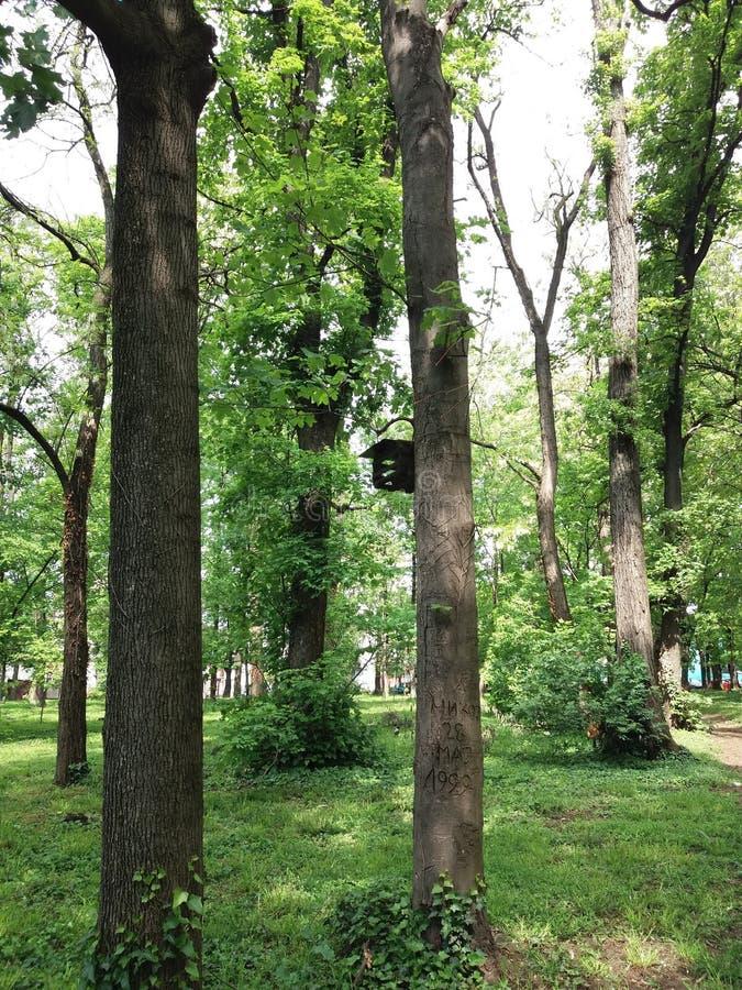 Belgrade - parc Sumice images stock