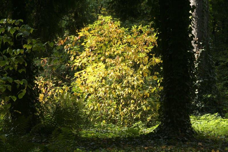Belichtete Blätter im Park stockfotografie