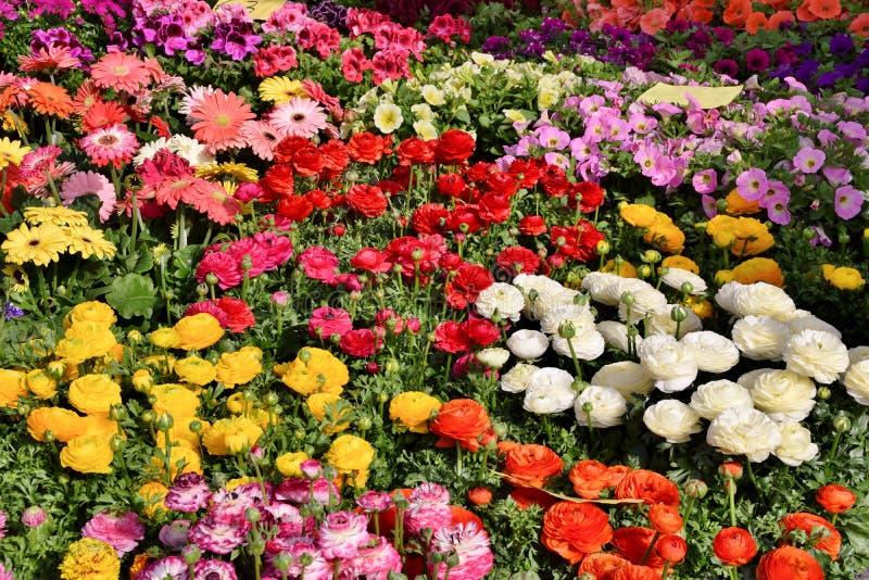 Belichtung der Blumentöpfe stockfotografie