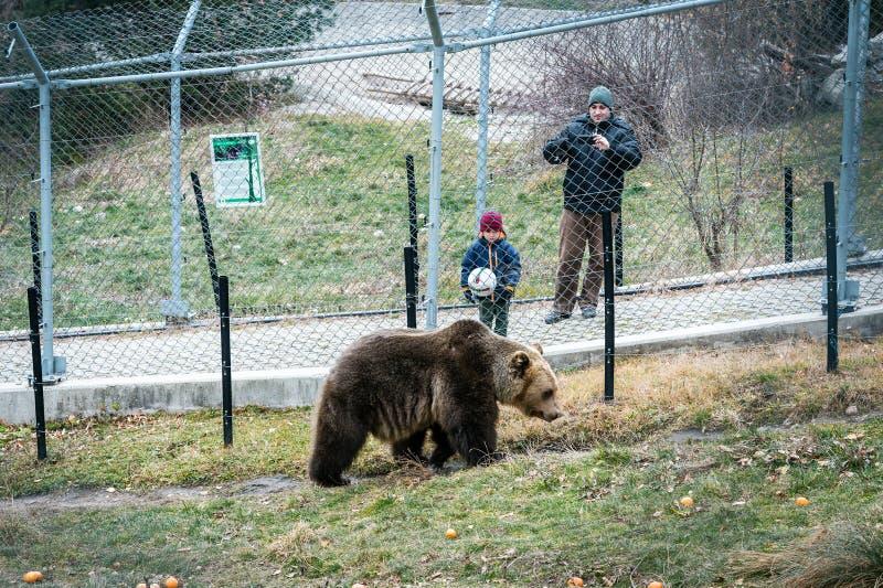 Belitsa dansbjörnar parkerar Bulgarien, Bansko arkivbilder