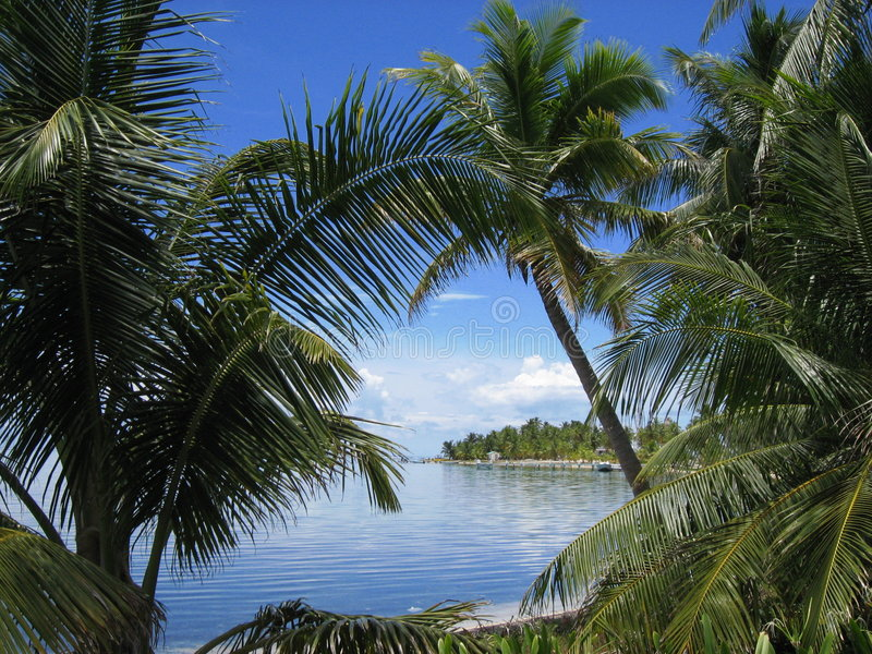 Belize Cayes Palm trees stock photography