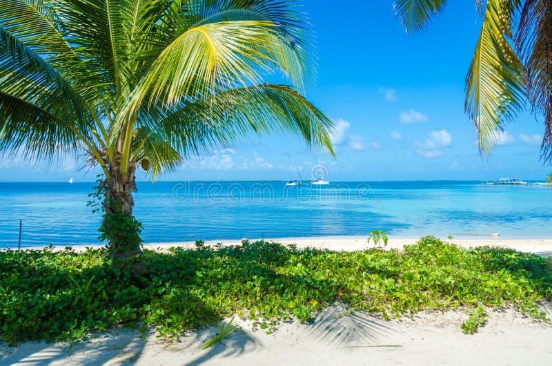 Belize Cayes zna? dla nurkowa?, snorkeling i relaksowa?, by? na wakacjach - Ma?a tropikalna wyspa przy bariery raf? z raj pla?? - obrazy royalty free